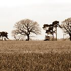 Tree Line by mikebov