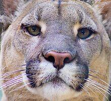 318 Puma by pcfyi