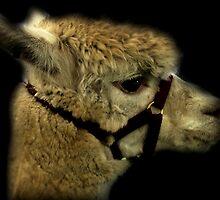 Profile - Alpaca by Evita