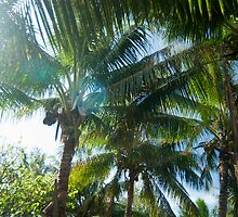 Tropical palms lit by the sun by photoeverywhere