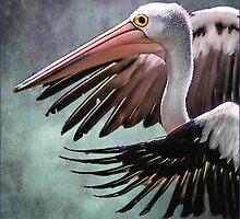 pelican by carol brandt