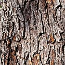 Smartphone Case - Tree Bark  by Mark Podger