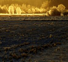 20.3.2014: Let There Be light by Petri Volanen