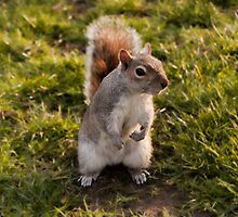 St. James Park Squirrel - London by eic10412