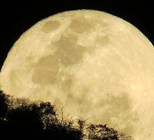 springtide's moonrise II - salida de la luna en primavera by Bernhard Matejka