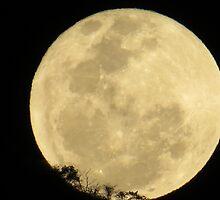 springtide's moonrise IV - salida de la luna en primavera by Bernhard Matejka