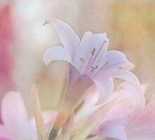 Sweetly Perfumed by Linda Lees