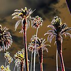 Palm Trees by TheJetSetter