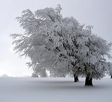 Snowy Tree by cadellin