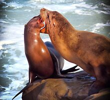 Sea Lions in La Jolla Cove by Anita Pollak