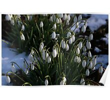 The First Snowdrops Poster