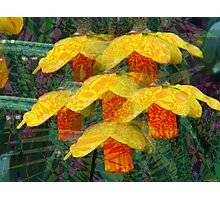 Kaleidoscopic Garden 1 Photographic Print