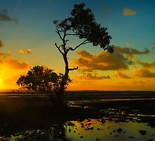 The lone Tree by Steve Bass