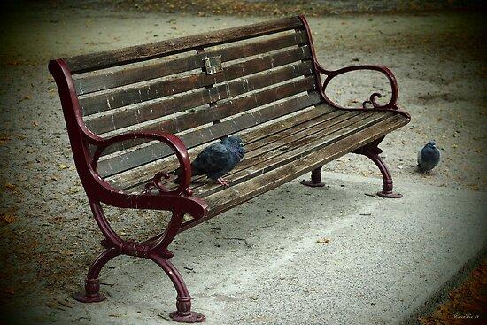 Park Bench by Karen E Camilleri