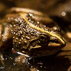 Cape River Frog by Etwin