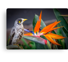 Bird in Paradise Canvas Print