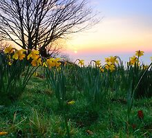 Spring Has Sprung by Mark Bowden