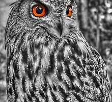 Long Eared Owl (Black and White) by © Steve H Clark