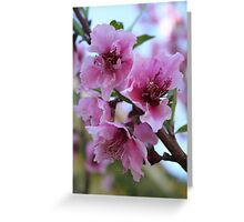 Peach Tree Blossom Close Up Greeting Card