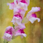 Snap Dragon by KathleenRinker