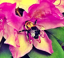 Bumble Bee by MadVonD