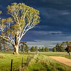 Charcoal Kiln Road, Kowen Forest, ACT, Australia. by Martin Lomé