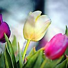 *Textured Tulips Card* by DeeZ (D L Honeycutt)