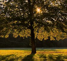 The Golden Light by NatureGreeting Cards ©ccwri