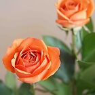 Orange Rose by Linda  Makiej