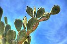 Prickly Pear against Blue Sky by Roger Passman