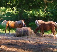Ranch Life by Brian Fowler