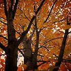 Fall Glow  by Jesse Diaz