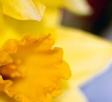 Daffodil-2102 by KAREN COLEBECK