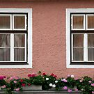 Double Windows And Geraniums by phil decocco