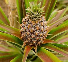 Azorean pineapple by miesnieks