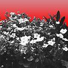 Flower Shock by Amber Elen-Forbat