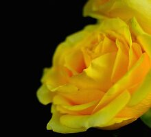 Yellow by HansenMurray
