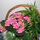 Pretty Pink Kalanchoe Flowers In Basket by BlueMoonRose