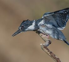 Learning to fly by (Tallow) Dave  Van de Laar