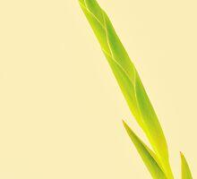 Green Tip by metriognome