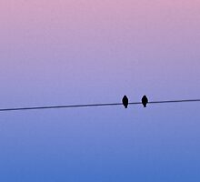 birds on a wire by alanaslens