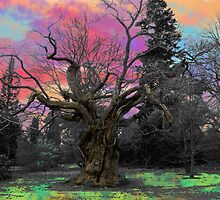 The Magic Wild Wood  by hootonles