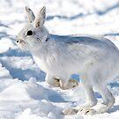 Kangaroo Rabbit by Jim Cumming