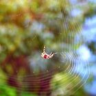 Spider Spinning web by michelleshustac
