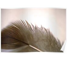 Downy Feather Poster