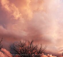 October Clouds by Stephanie Rachel Seely