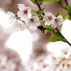 the bumble bee in the cherry tree by Janneke Broeksteeg
