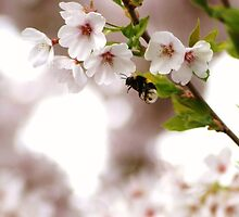 the bumble bee in the cherry tree by Janneke Broeksteeg