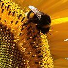 bumblebee sunbathing in a sunflower by Janneke Broeksteeg