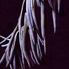 Medusa by deltos